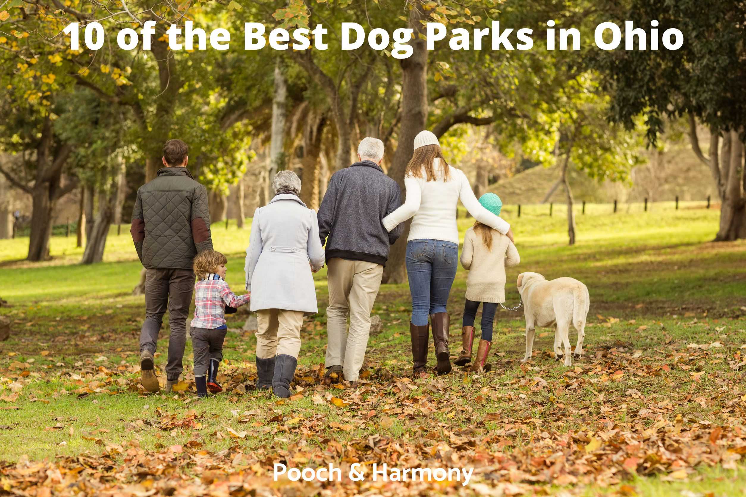 Best Dog Parks in Ohio
