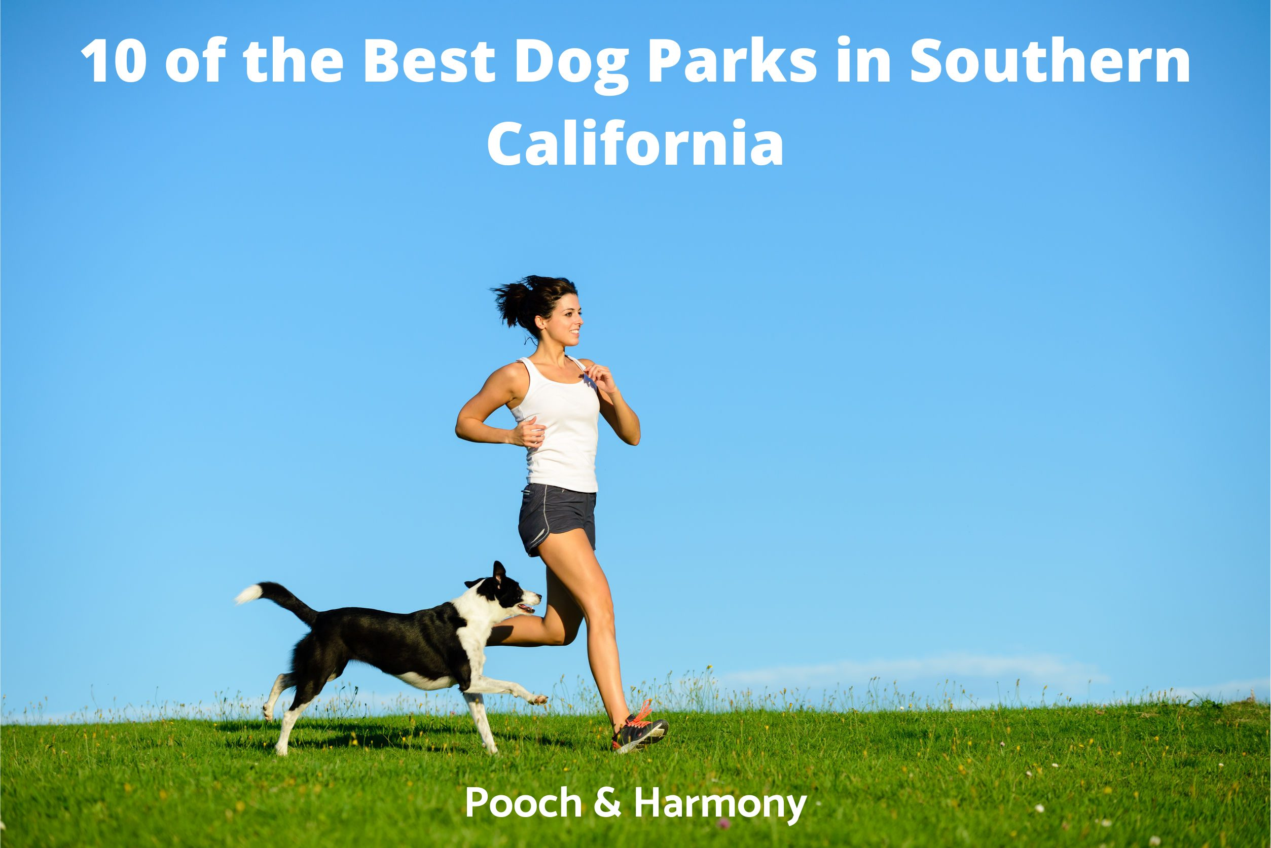 Best Dog Parks in Southern California