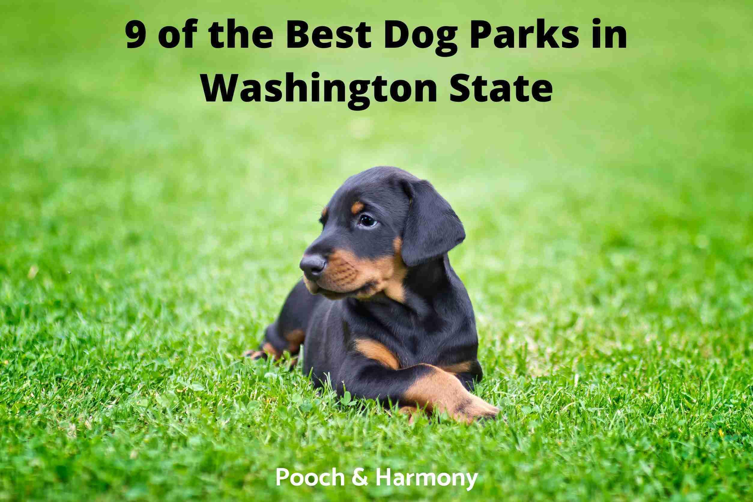 Best Dog Parks in Washington State