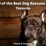 Best Dog Rescues in Toronto
