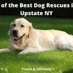Best Dog Rescues in Upstate NY