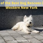 Best Dog Rescues in Western New York