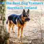 Best Dog Trainers in Northern Ireland