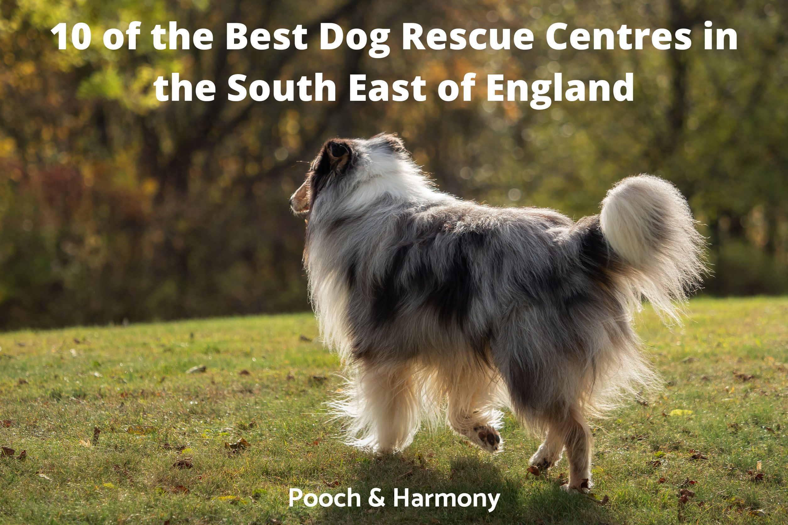 Dog Rescue Centres in the South East of England