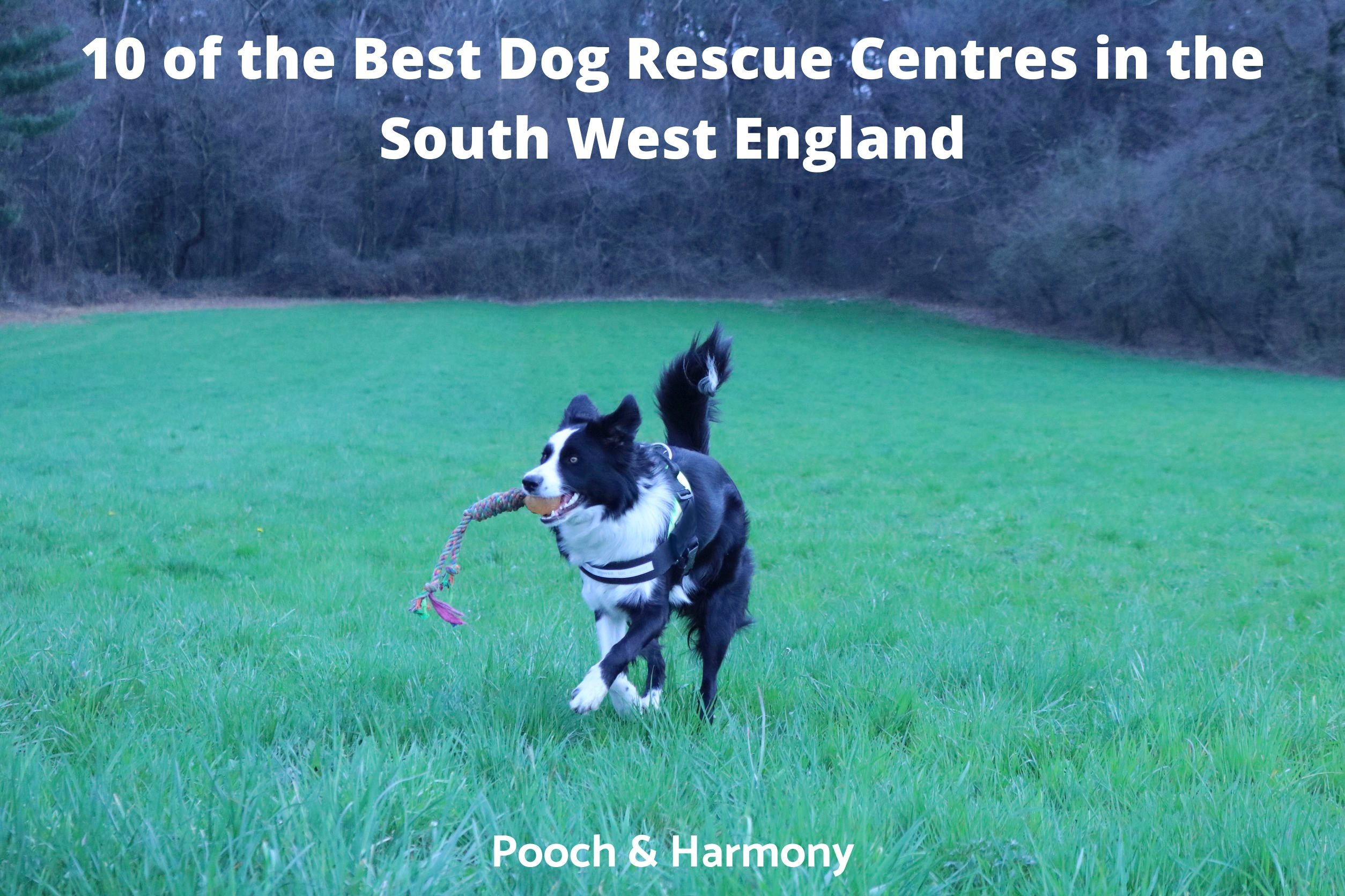 Dog Rescue Centres in the South West England