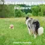 Best Dog Parks in Delaware