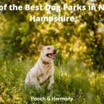 Best Dog Parks in New Hampshire