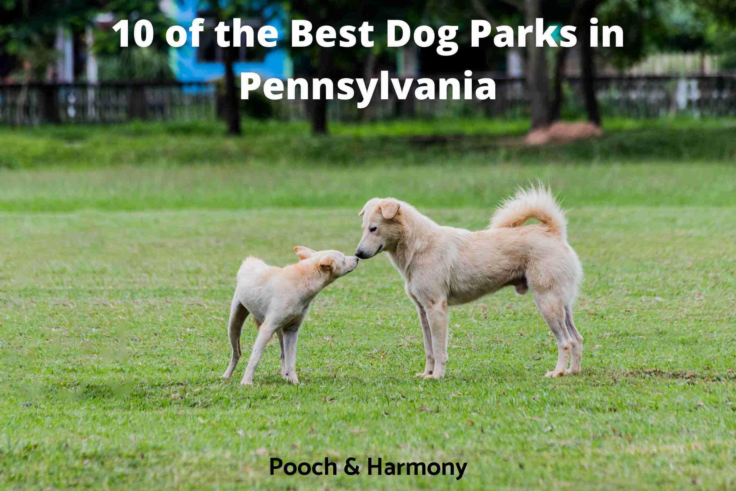 Best Dog Parks in Pennsylvania