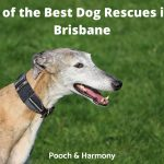 Best Dog Rescues in Brisbane