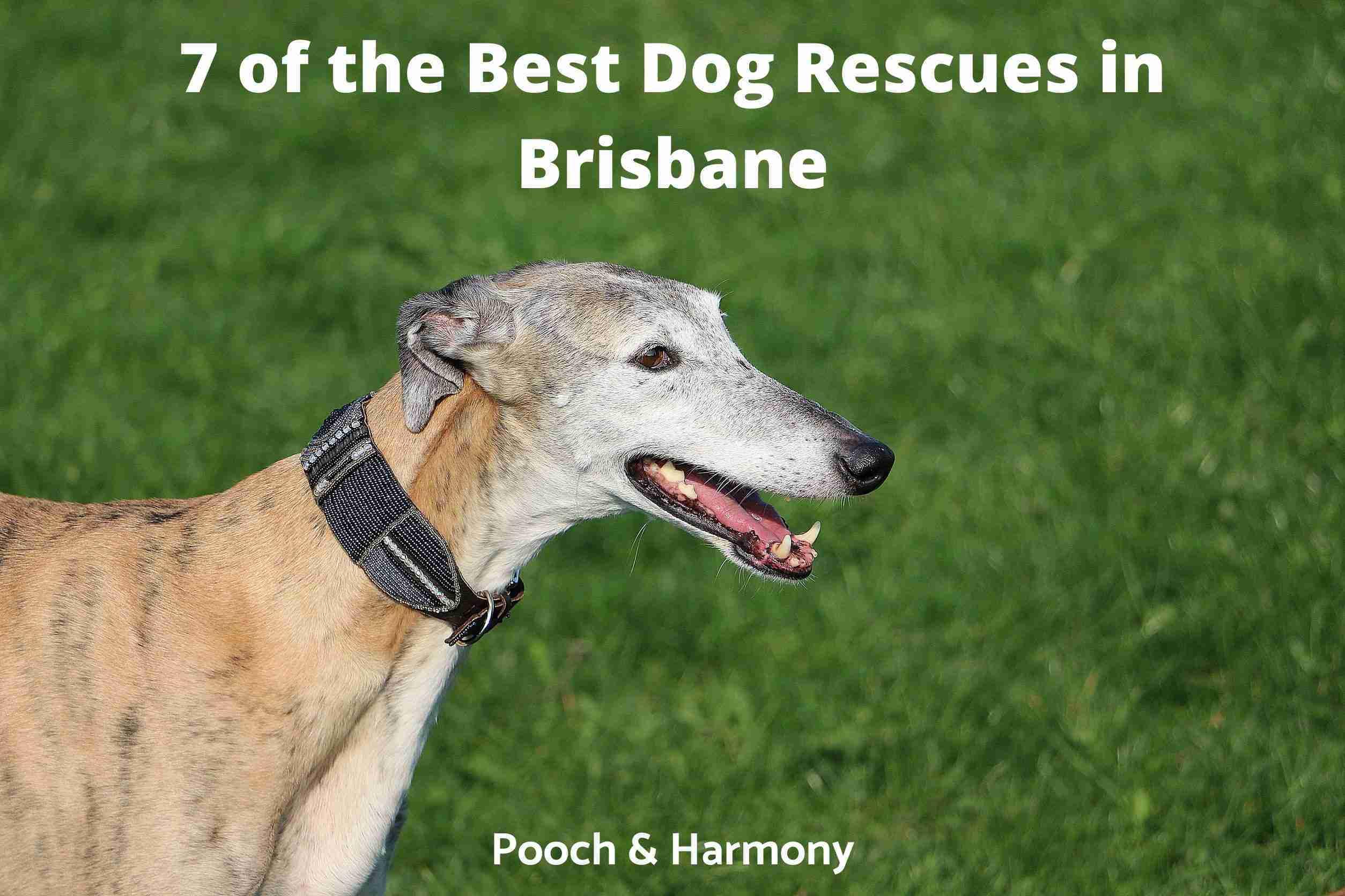 Best Dog Rescues in Brisbane
