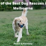 Best Dog Rescues in Melbourne