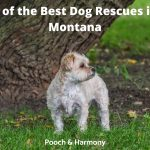 Best Dog Rescues in Montana