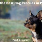 Best Dog Rescues in Perth