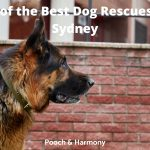 Best Dog Rescues in Sydney