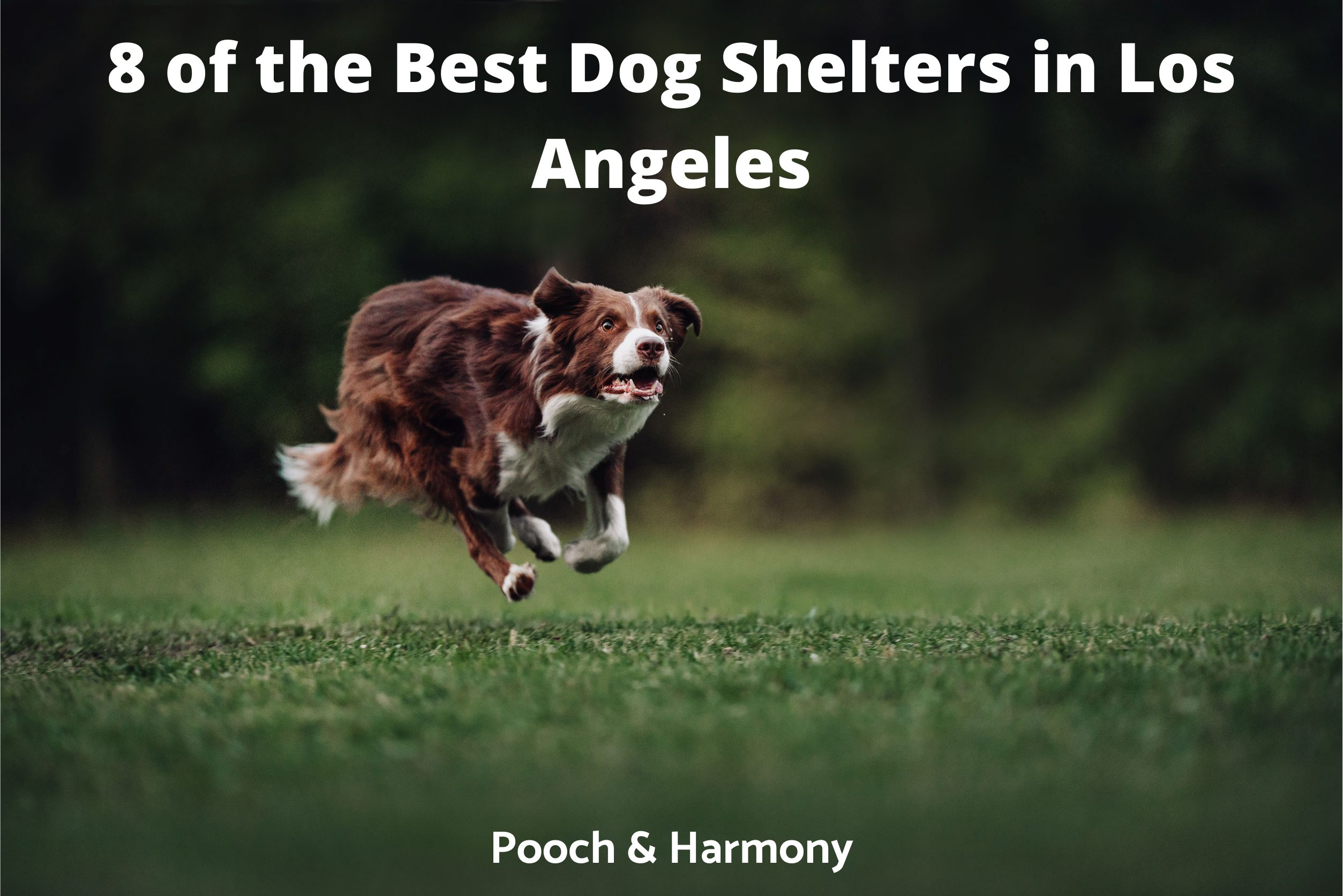 Best Dog Shelters in Los Angeles