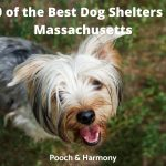 Best Dog Shelters in Massachusetts