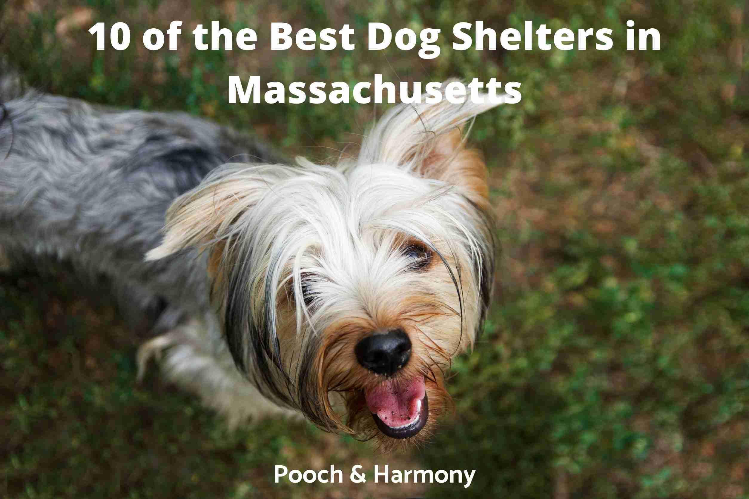 Best Dog Shelters in Massachusetts