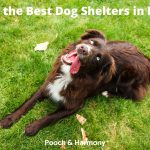 Best Dog Shelters in NYC