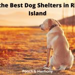Best Dog Shelters in Rhode Island