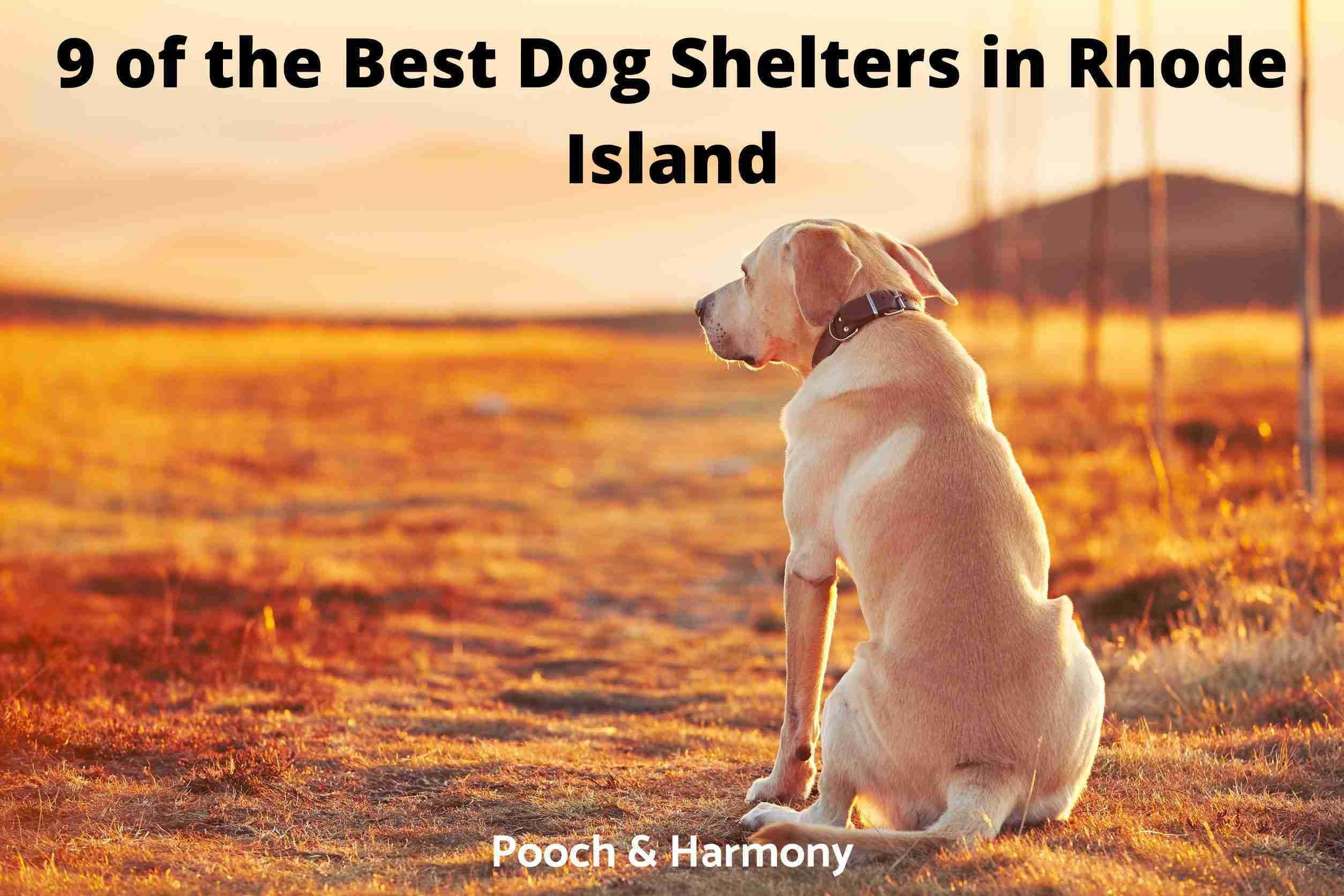 Best Dog Shelters in Rhode Island