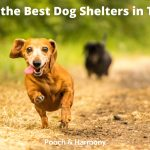 Best Dog Shelters in Texas