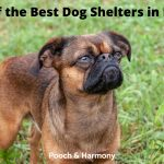 Dog Shelters in NSW