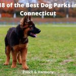 Best Dog Parks in Connecticut