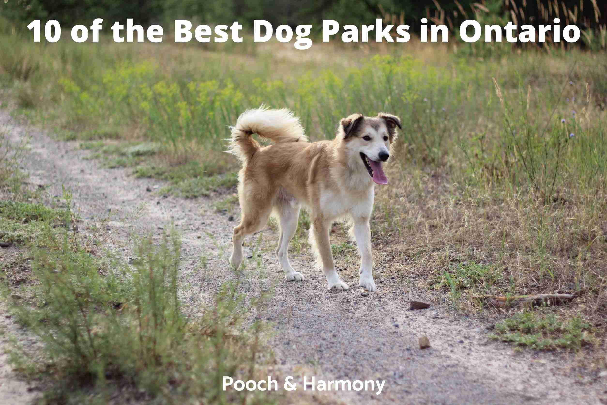 Best Dog Parks in Ontario
