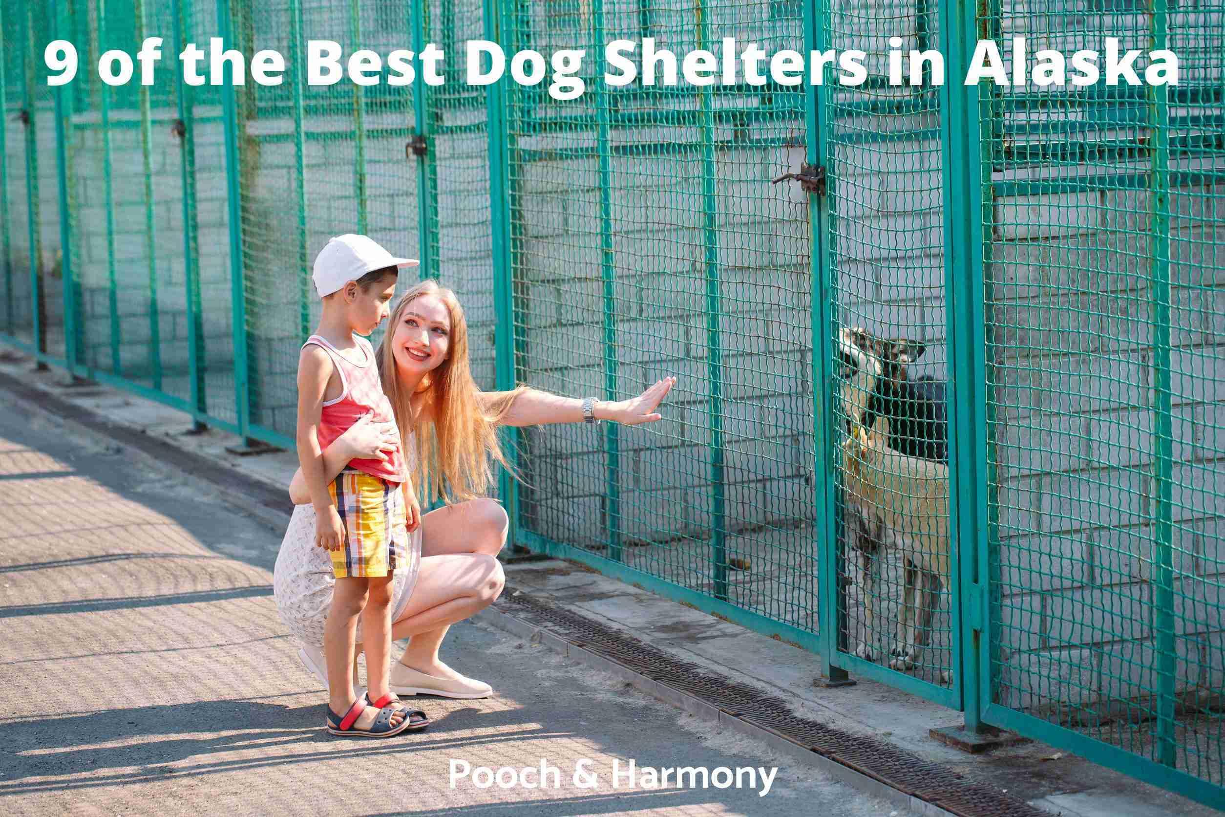 Best Dog Shelters in Alaska