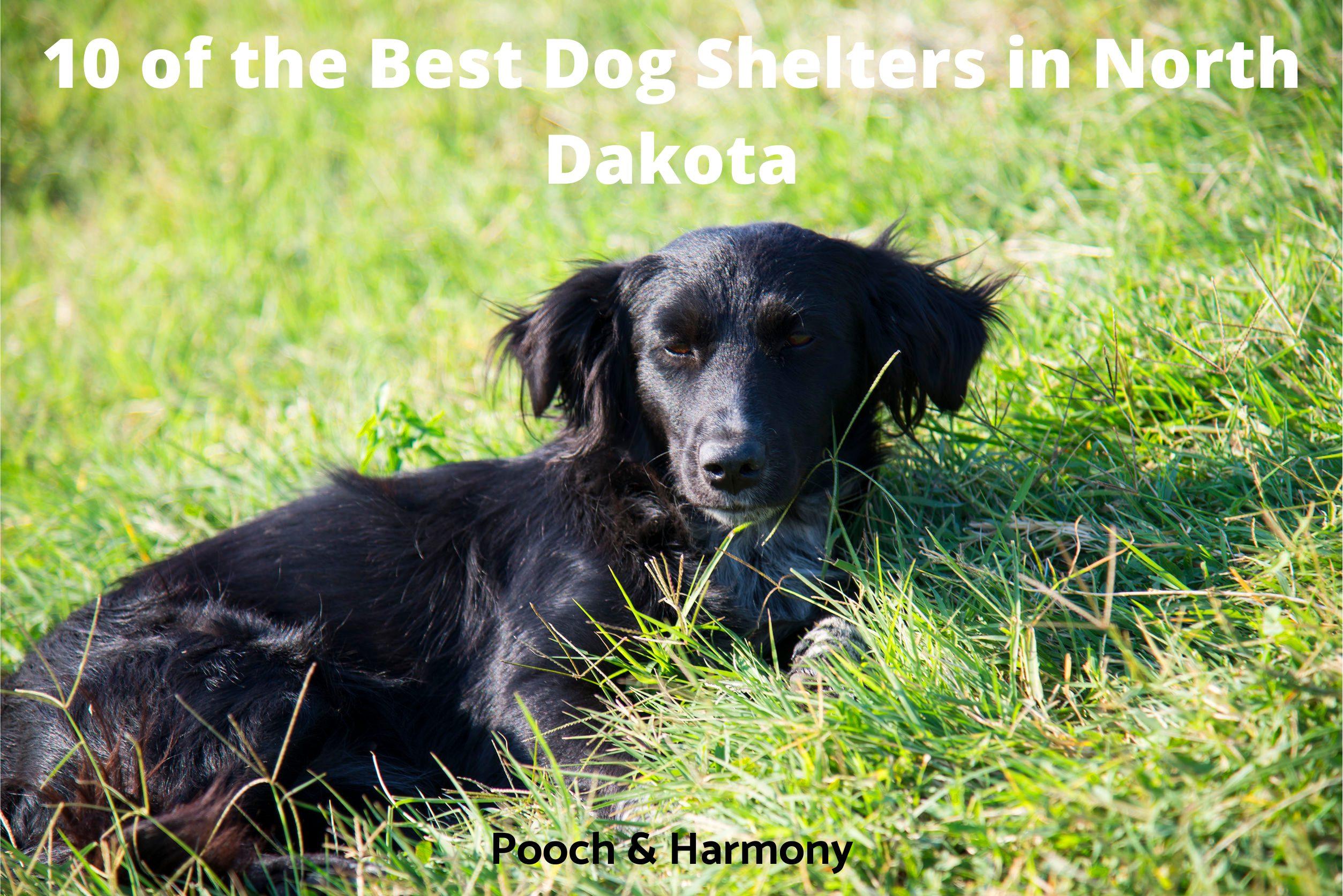 Best Dog Shelters in North Dakota