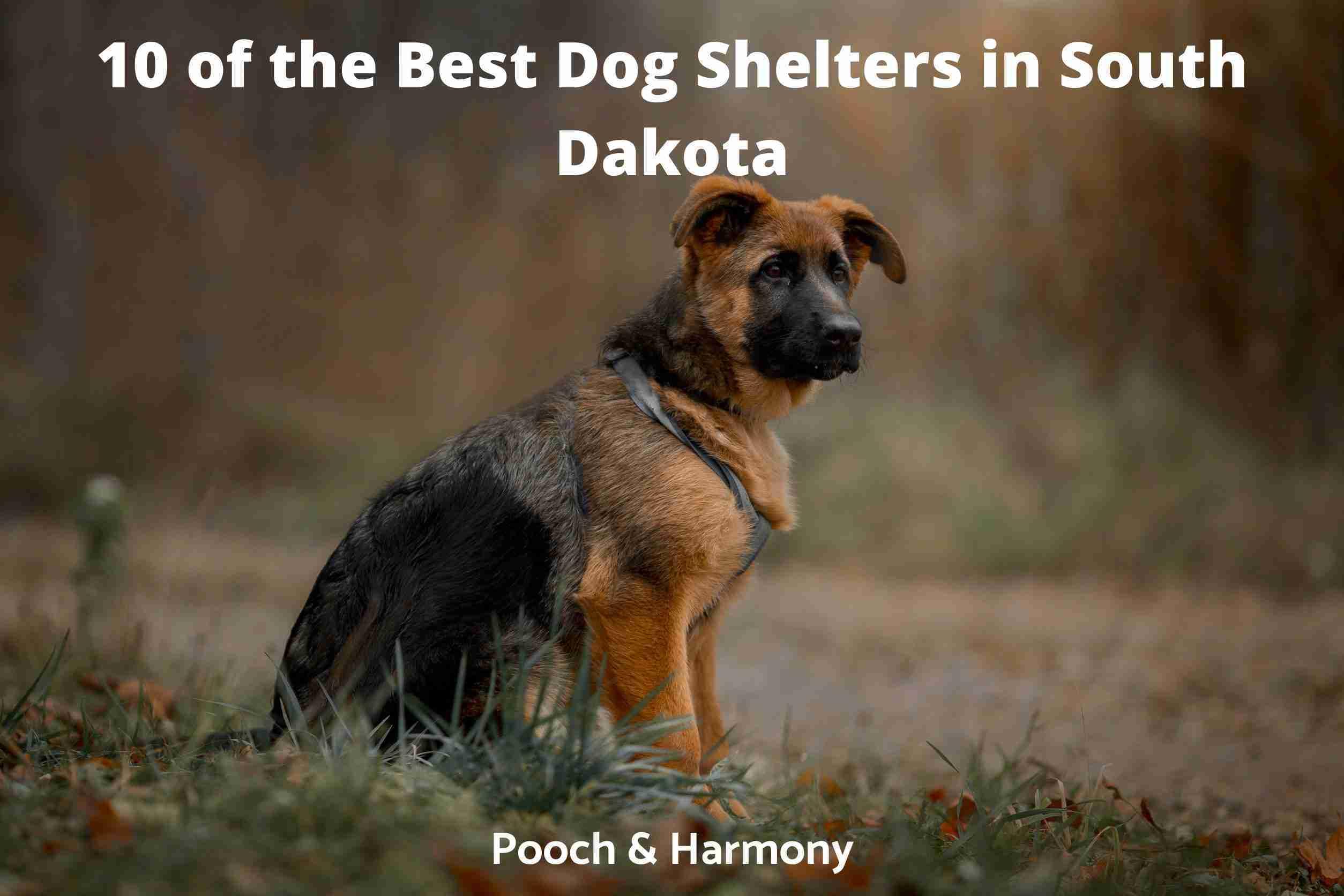 Best Dog Shelters in South Dakota