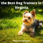 Best Dog Trainers in West Virginia