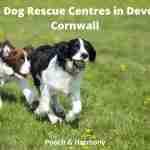 Dog Rescue Centres in Devon and Cornwall
