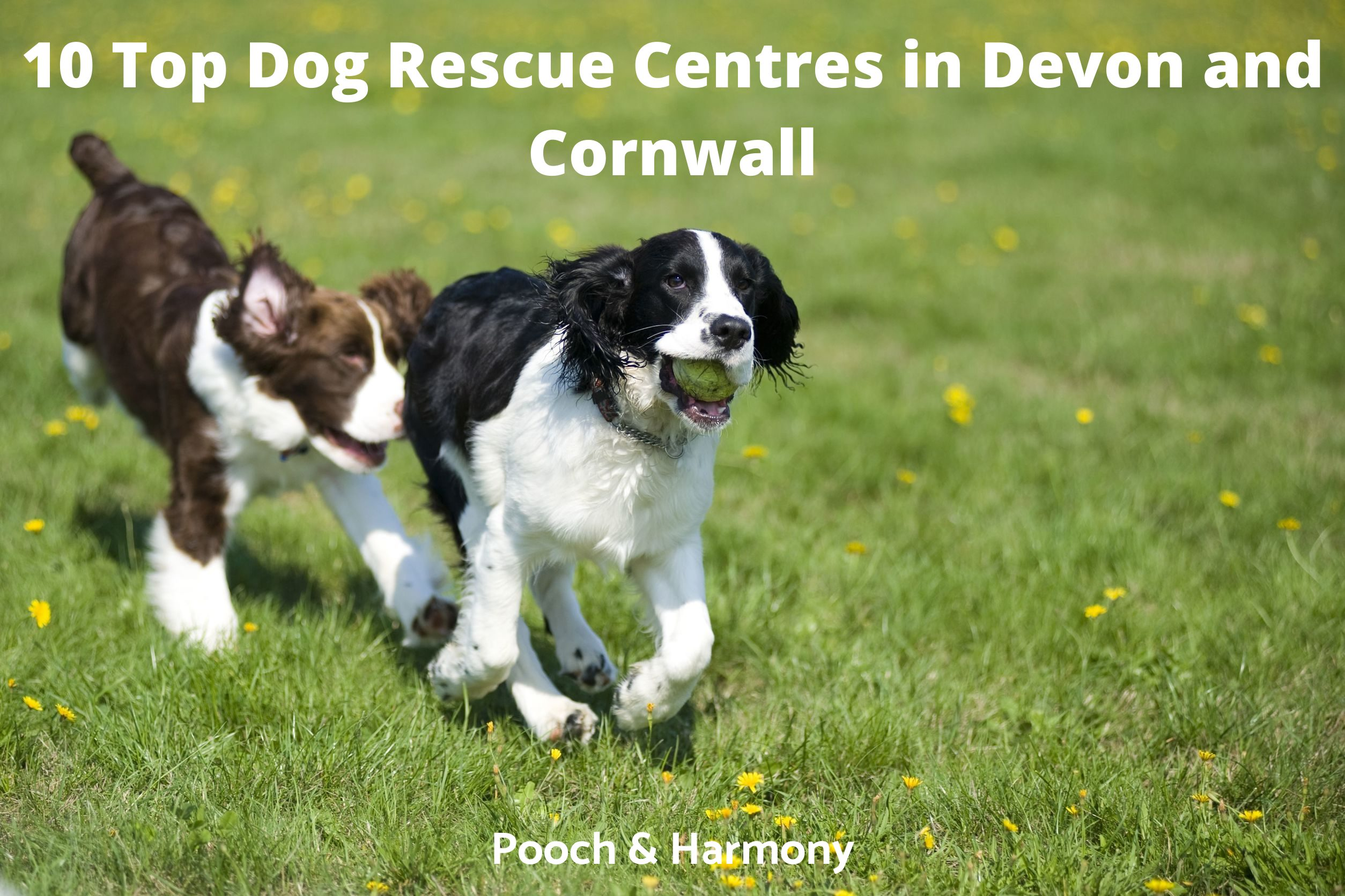 Dog Rescue Centres in Devon and Cornwall