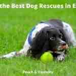Dog Rescues in Essex