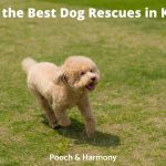 Dog Rescues in Kent