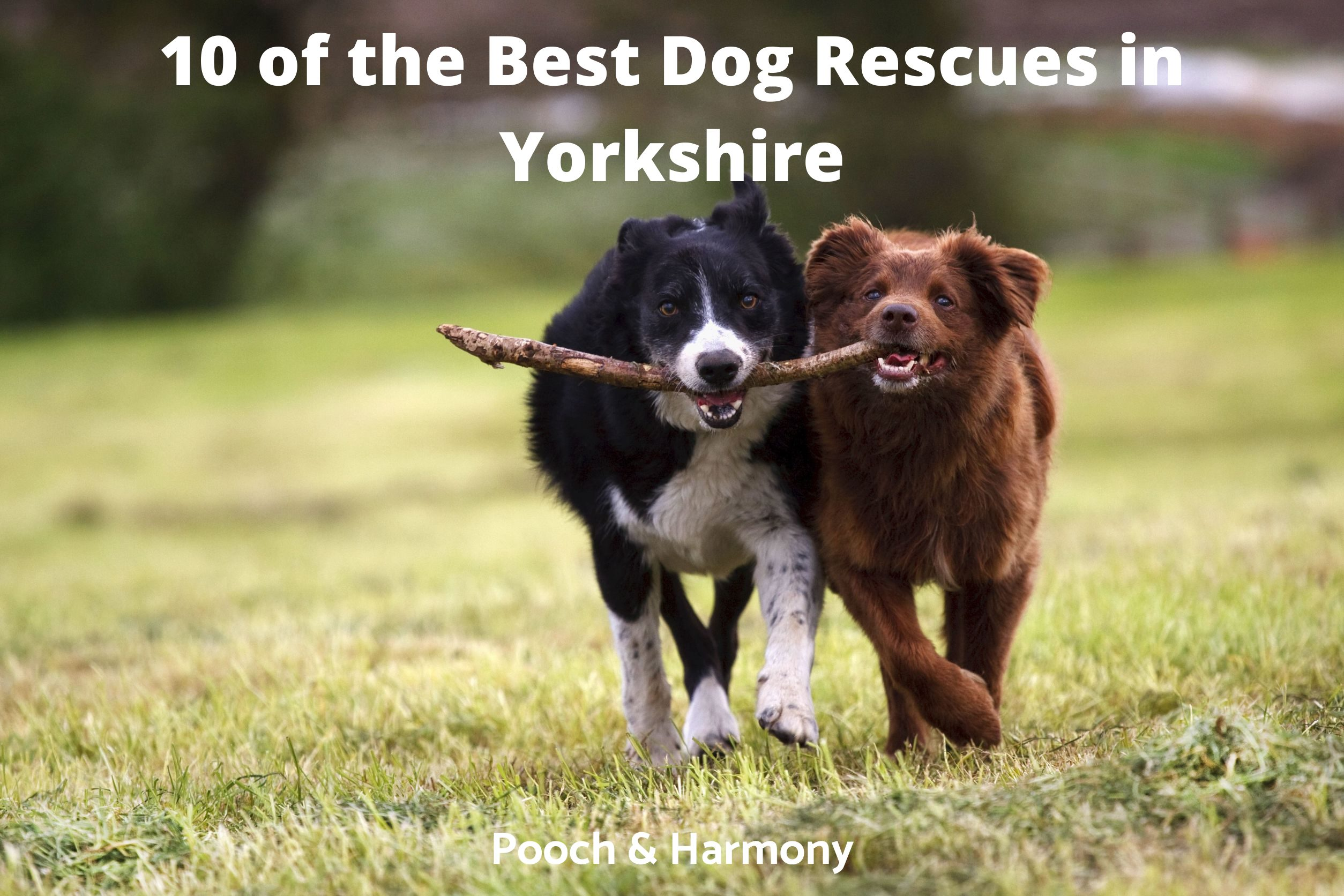 Dog Rescues in Yorkshire