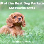 best dog parks in Massachusetts