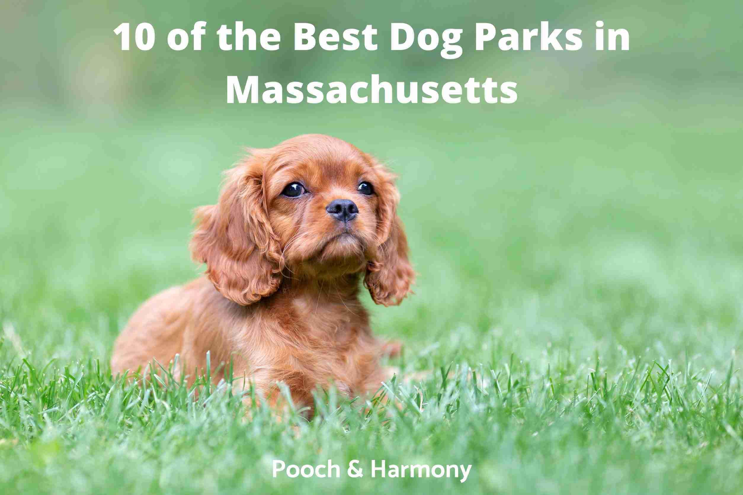 best dog parks in Massachusetts