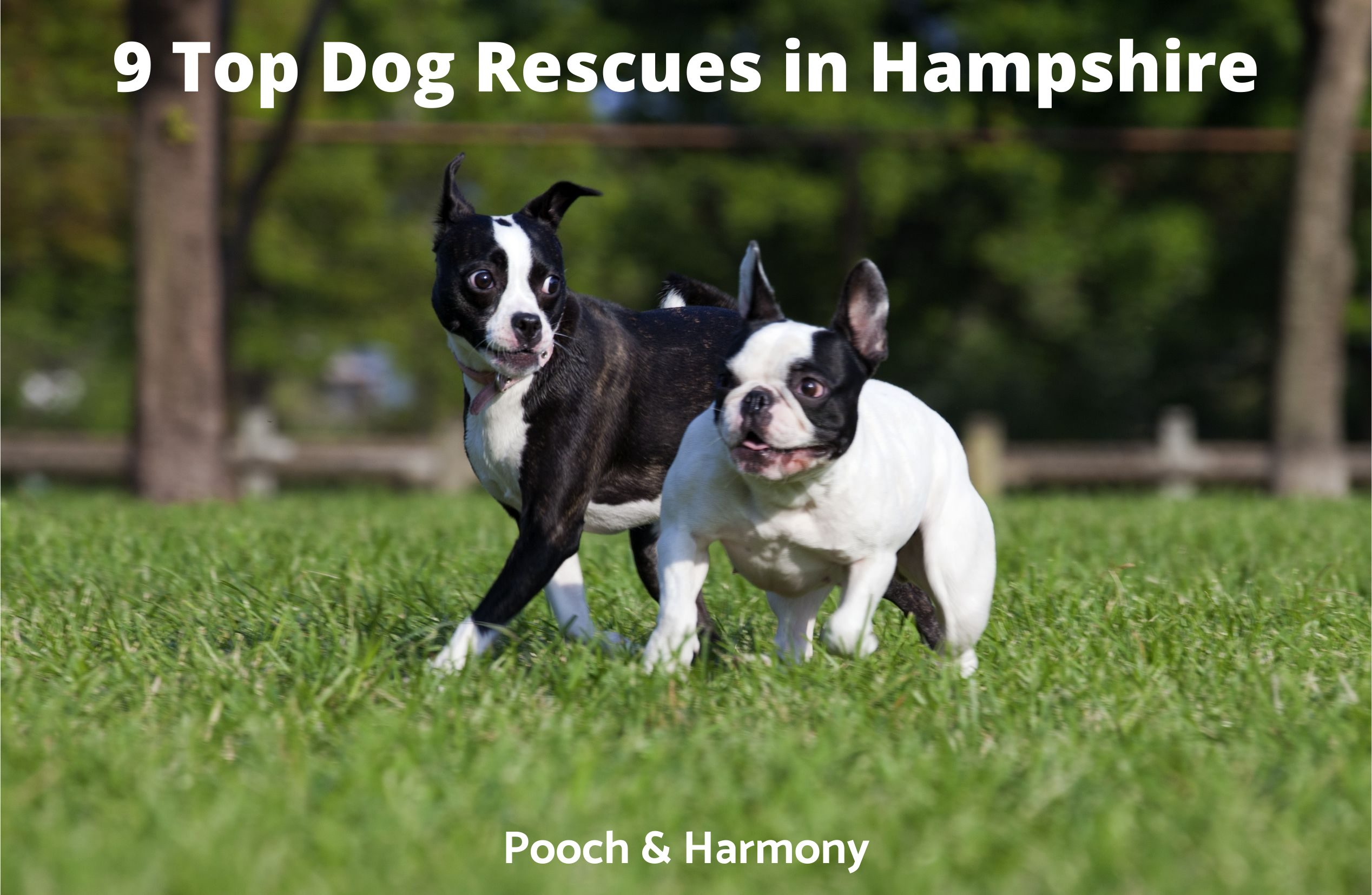 Dog Rescues in Hampshire