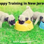 Puppy Training in New Jersey