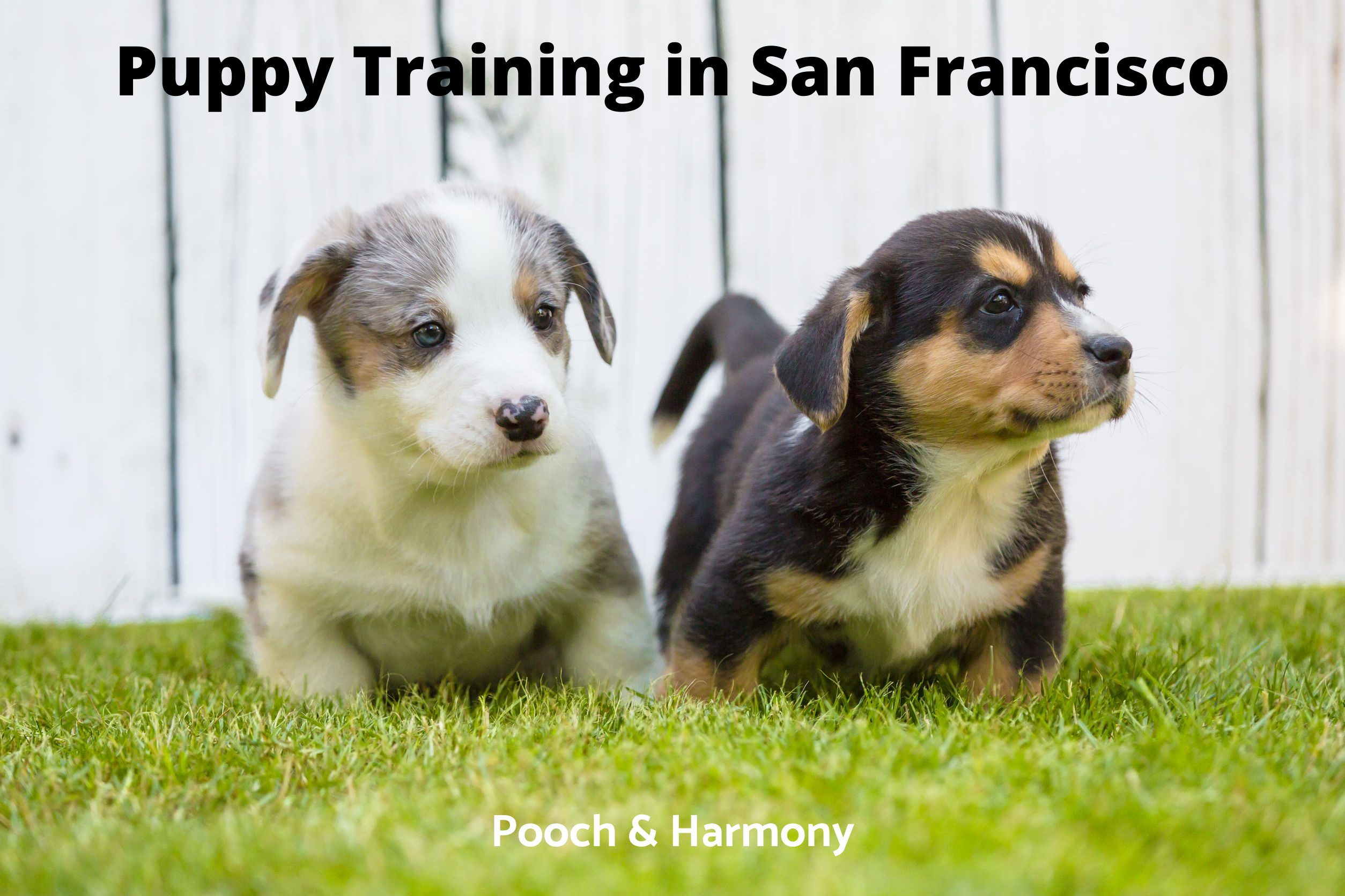 Puppy Training in San Francisco