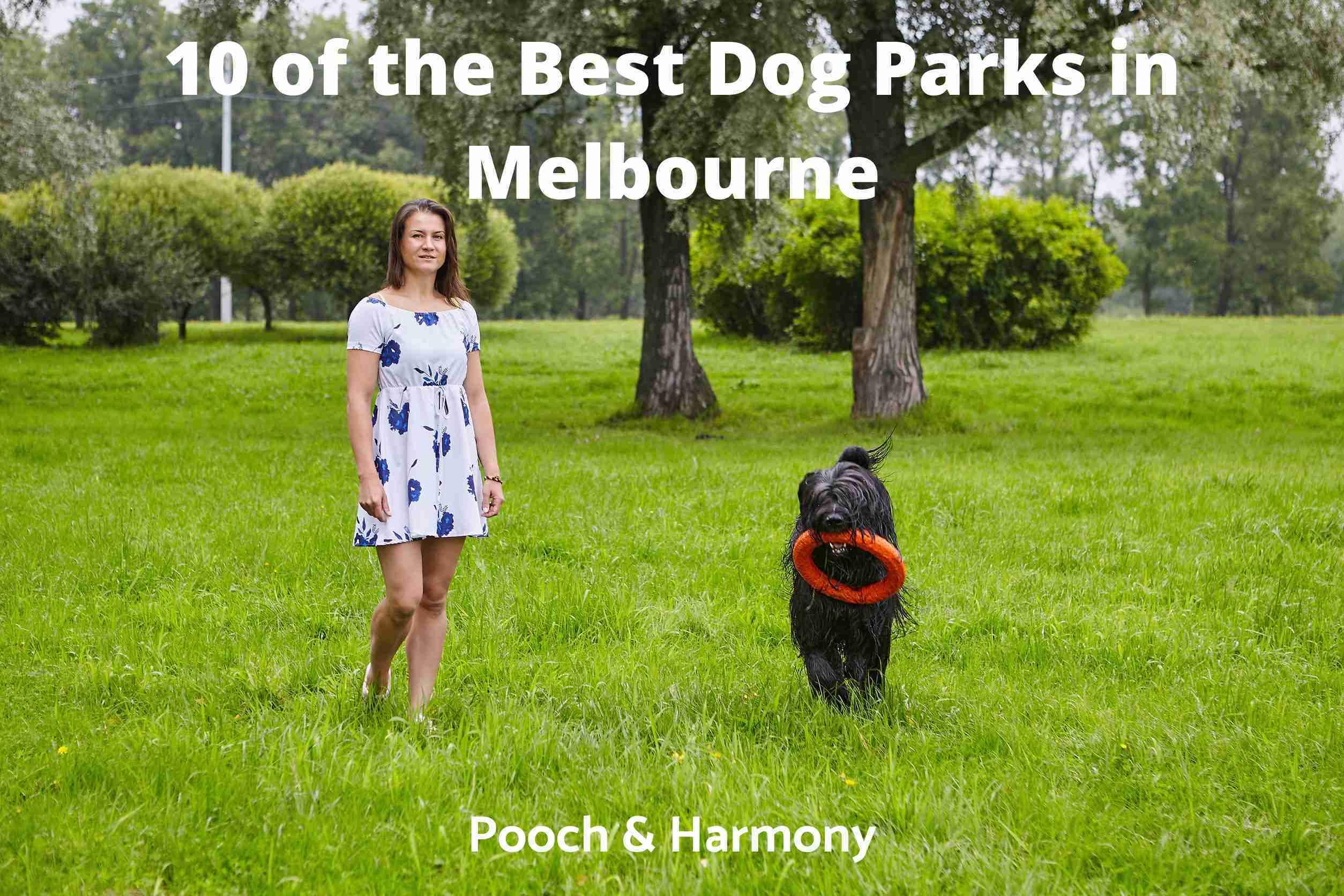 Best Dog Parks in Melbourne