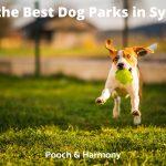 Best Dog Parks in Sydney
