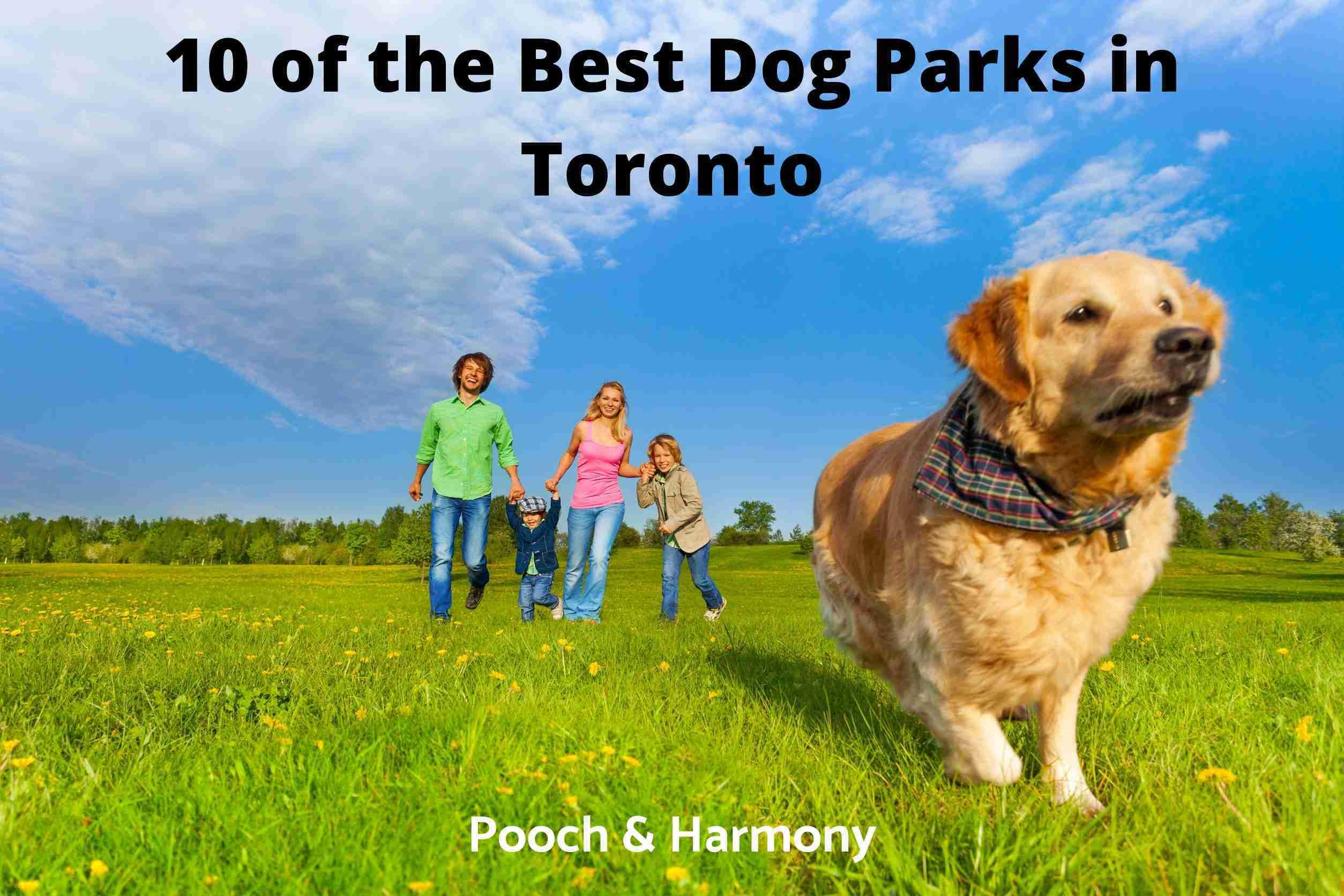 Best Dog Parks in Toronto