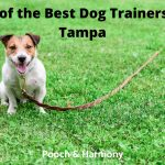 Best Dog Trainers in Tampa