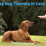 Dog Trainers in Cary, NC
