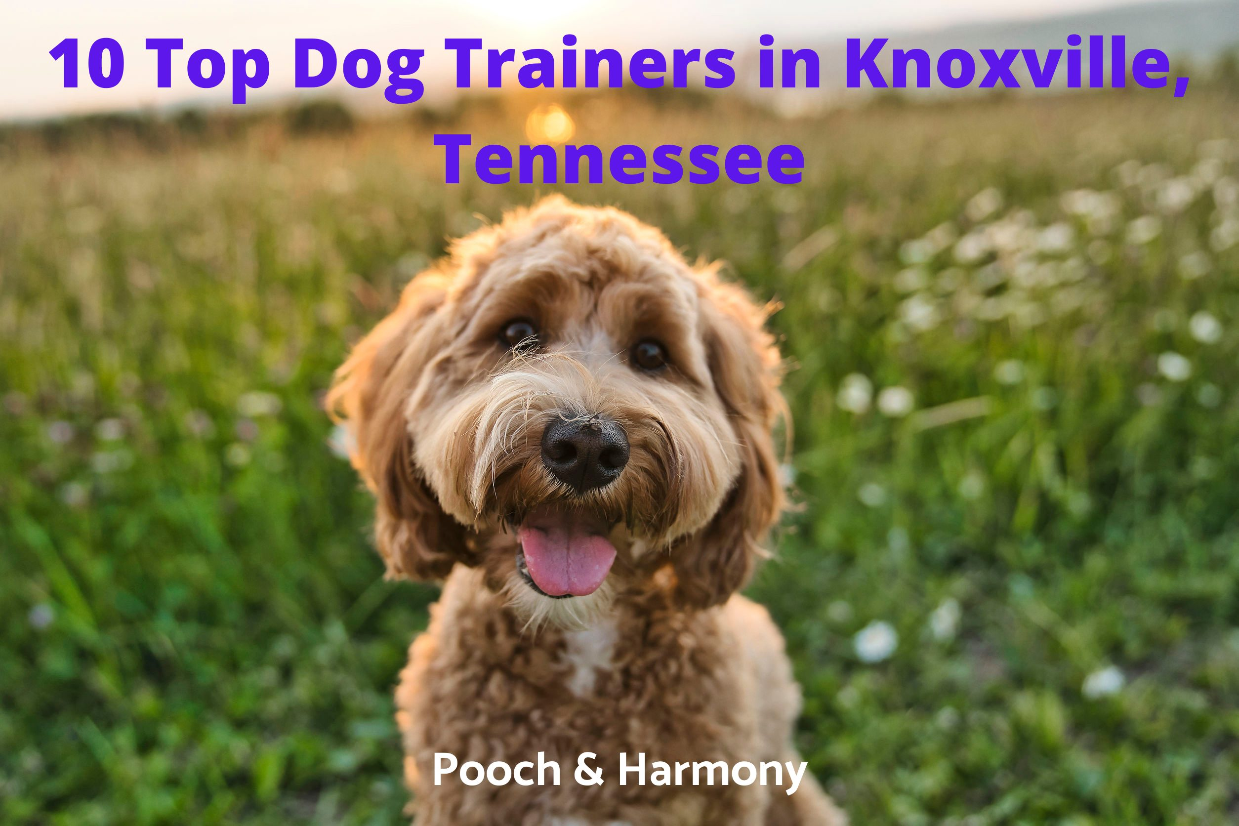 Dog Trainers in Knoxville, Tennessee