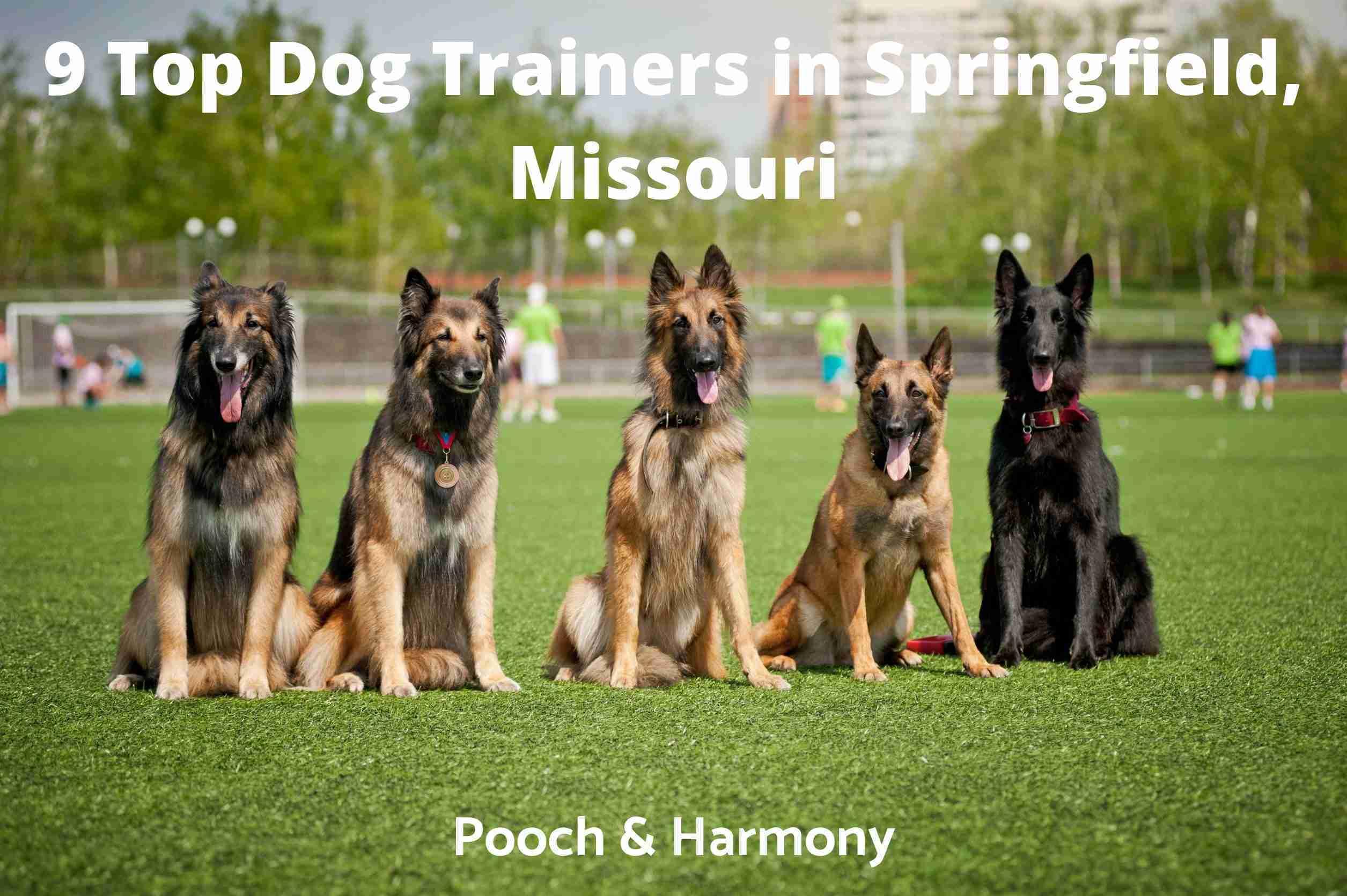 Dog Trainers in Springfield, Missouri