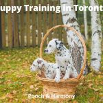 Puppy Training in Toronto